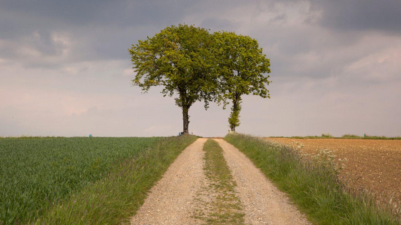 bomen op de top bij Eyserheide